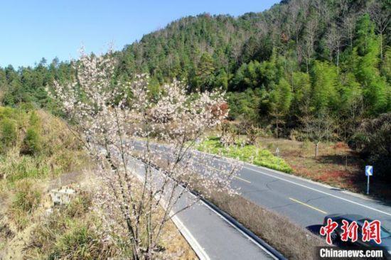 千島湖の春景色(資料提供・淳安宣伝部)。