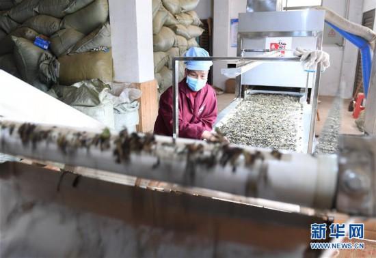 福建:抓好春耕备耕 保障农业生产