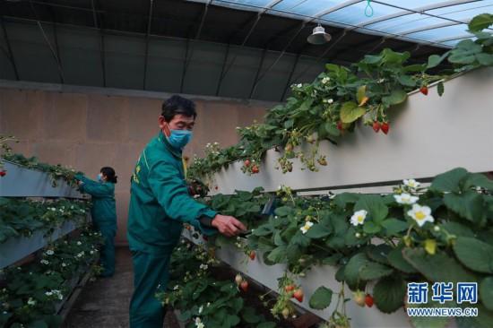 (经济)(1)兰州新区:打造现代农业