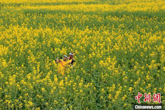 ミャオ族の村を黄色く染める菜の花畑 四川省