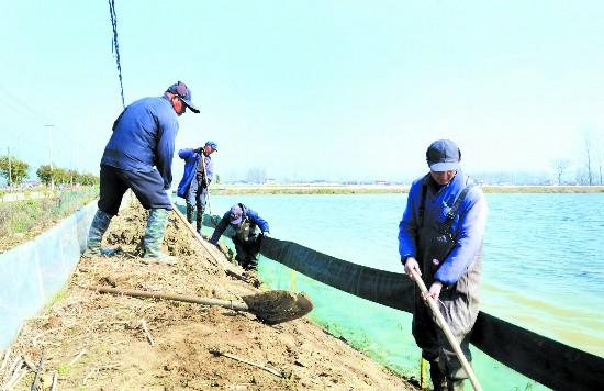 淮安金湖养殖户加固围网 为投放虾苗提前准备