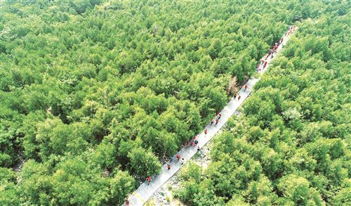 徐州深耕细作绿色发展:石头缝里绣出绿色森林