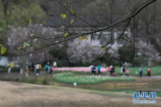 (社會)(1)杭州:春日太子灣公園 預約開放