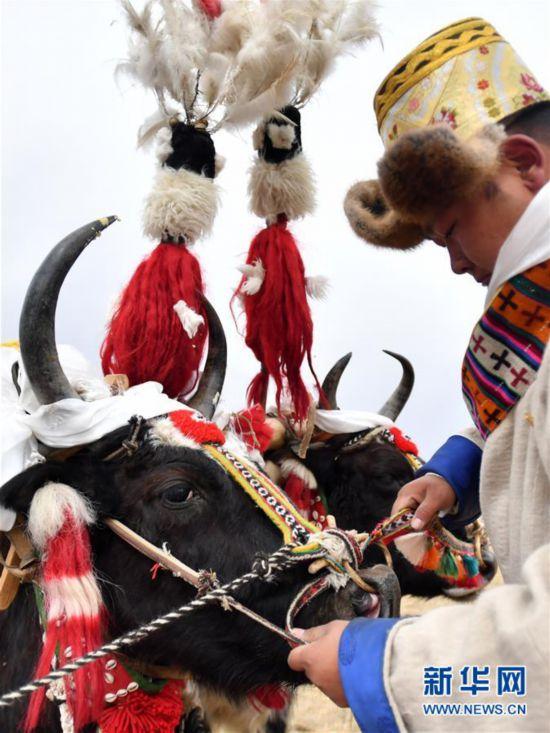 (经济)(2)西藏:春耕第一犁