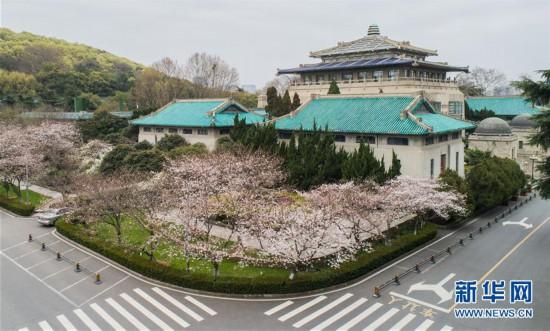 """(聚焦疫情防控)(1)武汉大学开通""""云赏樱""""  向公众展示校园樱花美景"""