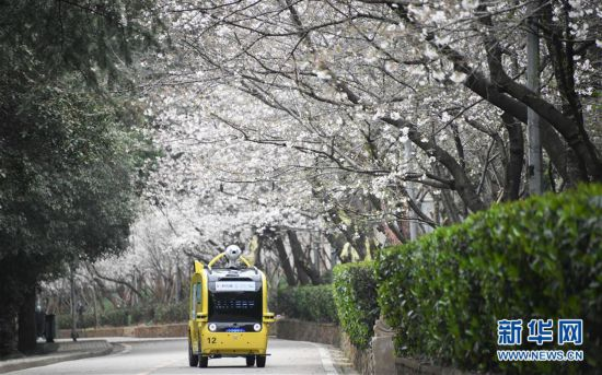 """(聚焦疫情防控)(4)武汉大学开通""""云赏樱""""  向公众展示校园樱花美景"""