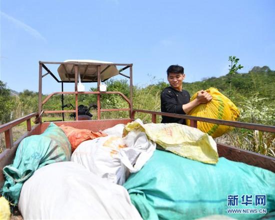 (经济)(3)江西宜春:田间地头生产忙