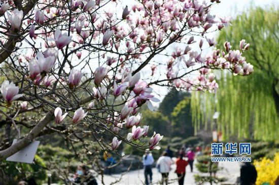 山东济南:繁花似锦 春意盎然