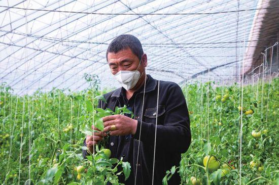松原市宁江区着力打造绿色棚菜基地 新建棚室200亩