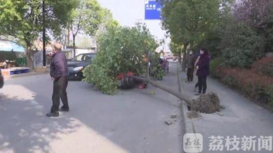 大風刮倒行道樹 南通一路過女子被砸中