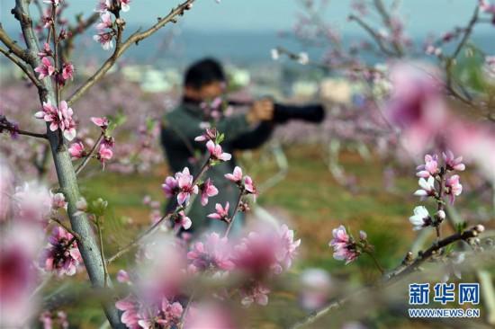 http://www.kmshsm.com/qichexiaofei/43489.html