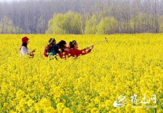 沭阳_油菜花海迎客来 (全媒体)(677148)-20200321084257