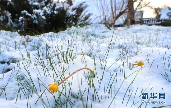 (XHDW)(2)白俄罗斯春雪