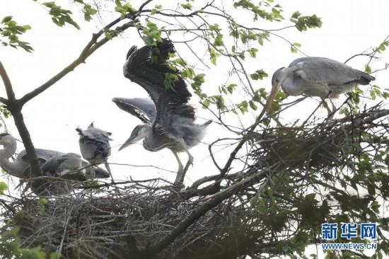 (环境)(1)贵州黔西:群鸟舞春