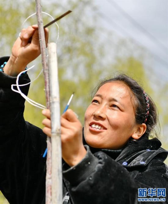 (经济)(4)西藏林芝:示范果园春来早
