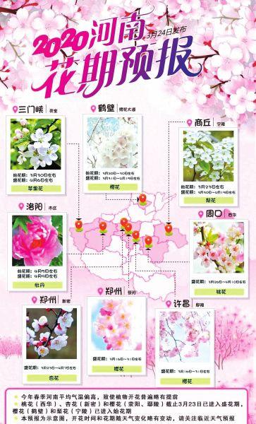 花都是啥时候开吗揭开?河南省几个地域的花期预报