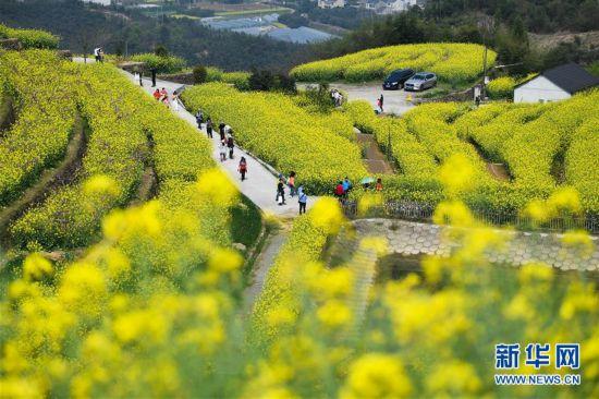 (美丽中国)(1)乡村旅游渐升温 山顶春色迎客来