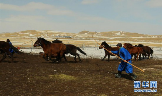 (新华视界)(1)内蒙古首支马背警队:警民联手驯马忙