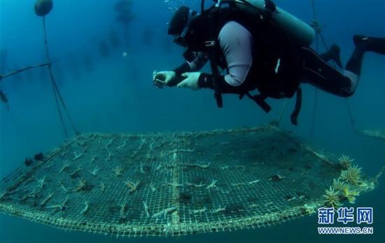 (环境)(3)海南三亚:海洋牧场复工忙