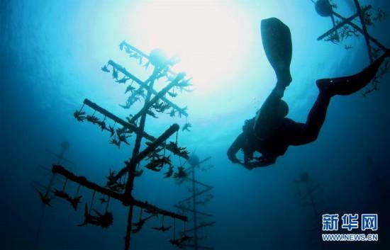 (环境)(2)海南三亚:海洋牧场复工忙