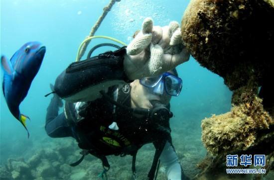 (环境)(10)海南三亚:海洋牧场复工忙