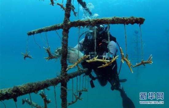 (环境)(7)海南三亚:海洋牧场复工忙