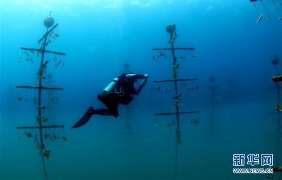 (环境)(1)海南三亚:海洋牧场复工忙