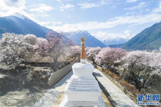 (美丽中国)(8)西藏林芝桃花盛开