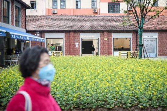 """上海愚园路,130平方米、3000棵""""金贵""""的油菜花绽放"""