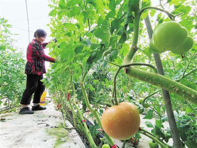 海门76家农业龙头企业带动全国50万人致富