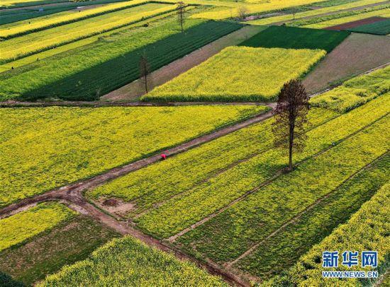 (春季美丽生态)(5)大地之春