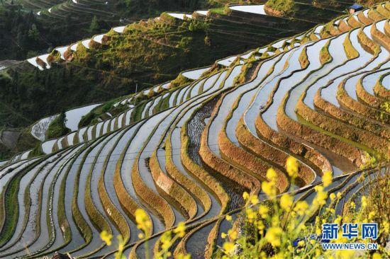 (春季美丽生态)(4)贵州从江:大山深处梯田美