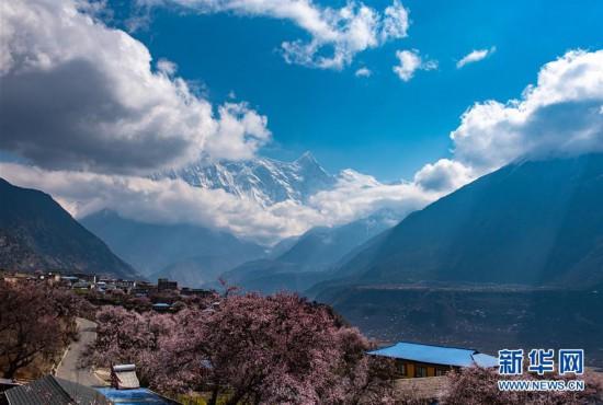 (春季美丽生态)(4)春到雅鲁藏布江大峡谷