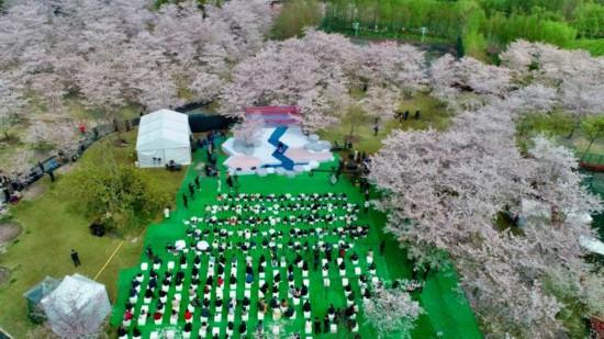 """最风雅的樱花季 樱花在""""云上""""等你"""