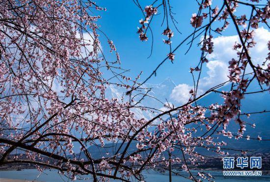 (春季美丽生态)(6)春到雅鲁藏布江大峡谷