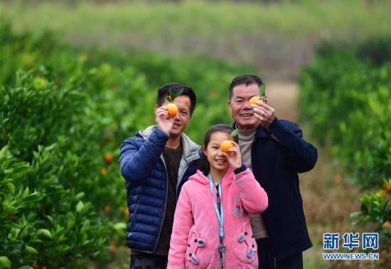 可爱的乡村――鹿寨蜜橙父子兵