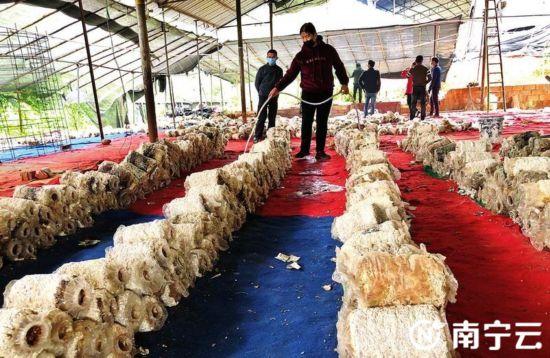 南宁良庆区玉洞街道特色产业让村民走上致富路