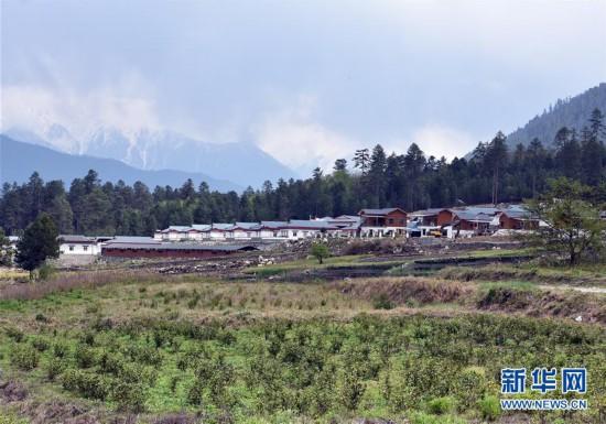 (脱贫攻坚)(1)西藏察隅首批春茶开采