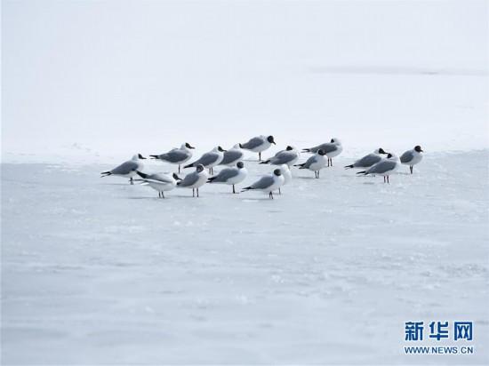 (环境)(1)雪后青海湖
