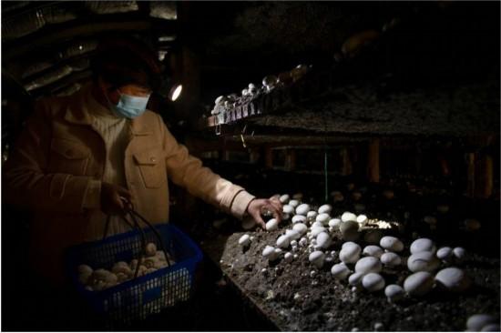 """""""老呂""""和他的106座蘑菇大棚的故事"""