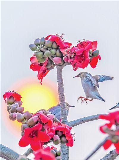 花儿开 鸟儿俏