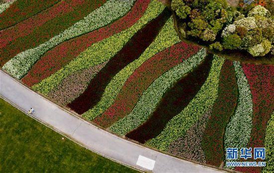 """(环境)(2)上海浦东:世纪公园的""""彩色季"""""""