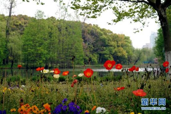 """(环境)(4)上海浦东:世纪公园的""""彩色季"""""""