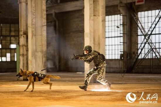 警犬進行追捕訓練。