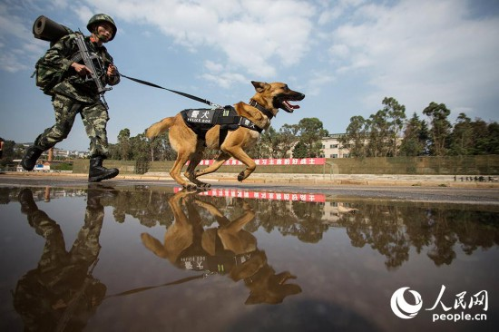 警犬與訓導員一起進行3公裡武裝奔襲。