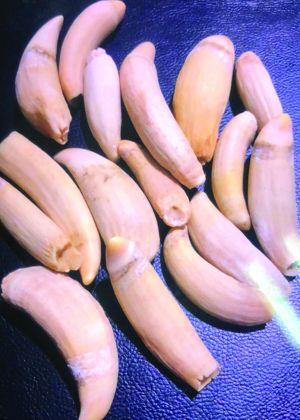 蘇州男子網售珍貴瀕危野生動物制品 一克鯨牙加工費300元
