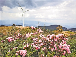 [风机]风轮直径146米大风机宁蒗并网发电