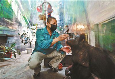 """80后]北京动物园:""""白虎转圈""""与动物福利没有必然关联,福利水平,北京动物园,[动物福利,胖胖王争还给动物们做起了中药香囊."""