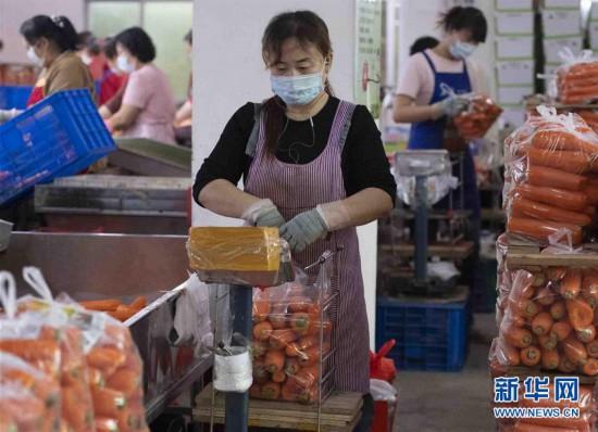 #(經濟)(1)福建南安:生產穩步推進