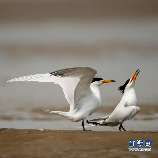 """""""神话之鸟""""再现闽江沙洲"""